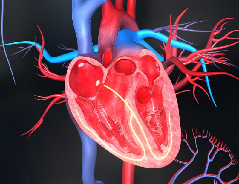The Medical Minute: Minimally Invasive Treatments for Structural Heart Disease